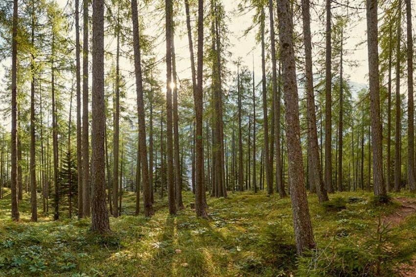 STIHL FRANCE : Nouveau sondage OpinionWay - mars 2021… Pour 89% des Français, la forêt appartient au patrimoine français au même titre que la gastronomie ou les monuments historiques