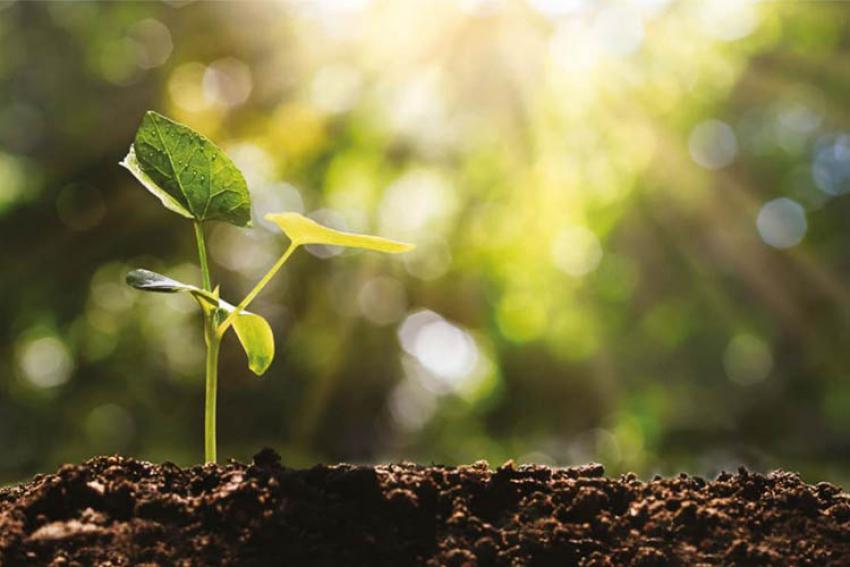 GROUPE ECT : Urbafertil, issu du recyclage de terres inertes et des déchets verts, est un substrat fertile recommandé pour les sols de prairies, les fosses d'arbres et les jardinières