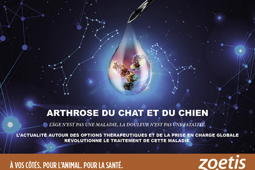 ZOETIS FRANCE : Une thérapie innovante qui révolutionne la prise en charge globale de l'arthrose des chiens et des chats