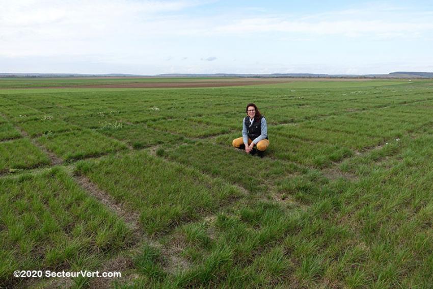 GNIS / BARENBRUG : Comment sont produites les semences à gazon ? La station de recherche de Connantre... Focus sur le Ray-grass anglais (4/5)