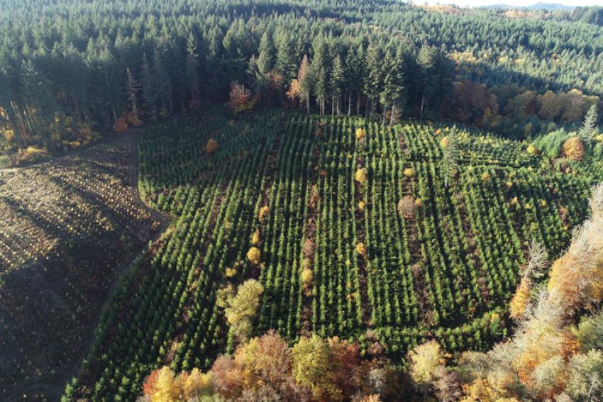 FONDS DE DOTATION PLANTONS POUR L'AVENIR : Grâce à une centaine de mécènes, 3 millions d'euros de dons ont déjà été collectés pour reboiser 1 000 hectares de forêts en France