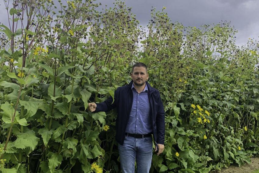 SILPHIE FRANCE : La sylphie, une plante mellifère aux multiples atouts agroécologiques et aux nombreuses possibilités d'utilisation écologiques dans différents secteurs d'activité