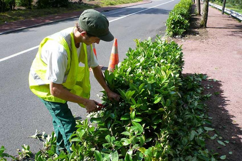 PLANTE & CITE : Décembre 2020 - Lancement d'un observatoire sur les aménagements arbustifs en partenariat avec Les Arbusticulteurs