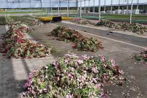 BHR-JARRY PRODUCTIONS HORTICOLES PRINTEMPS 2020 CORONAVIRUS COVID-19