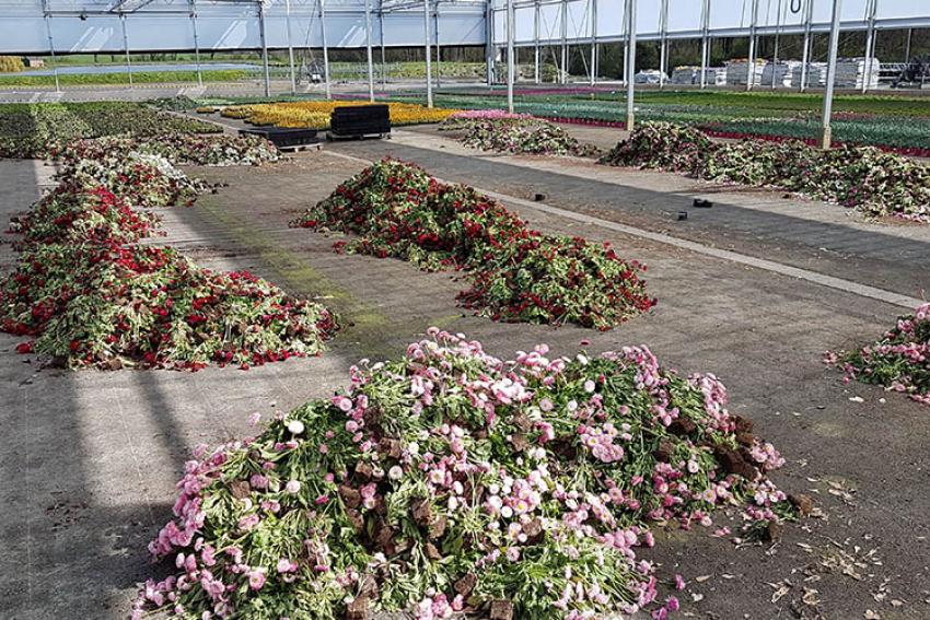 BHR- Bureau Horticole Régional des Pays de la Loire : Le Coronavirus Covid-19, qui touche de plein fouet la filière horticole, tombe au plus mauvais moment de la saison de printemps 2020