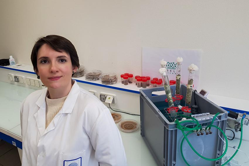 VEGEPOLYS VALLEY : Projet Trichoderma avec Cybèle Agrocare ou comment lutter contre les bactérioses sans produit phytopharmaceutique mais avec un champignon