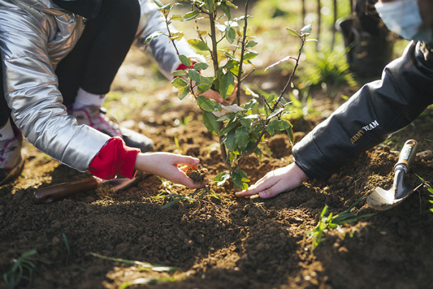 TRUFFAUT : En mars 2021, la 1ère édition de l'opération « Vous plantez, nous plantons » a été un véritable succès