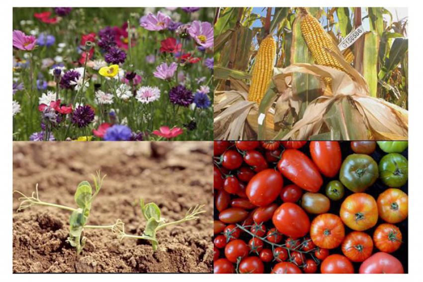 """Tribune Libre accordée au GNIS (Groupement National Interprofessionnel des Semences et plants) : """"un article du Projet de loi EGA risque de mettre en péril la santé de nos jardins"""""""
