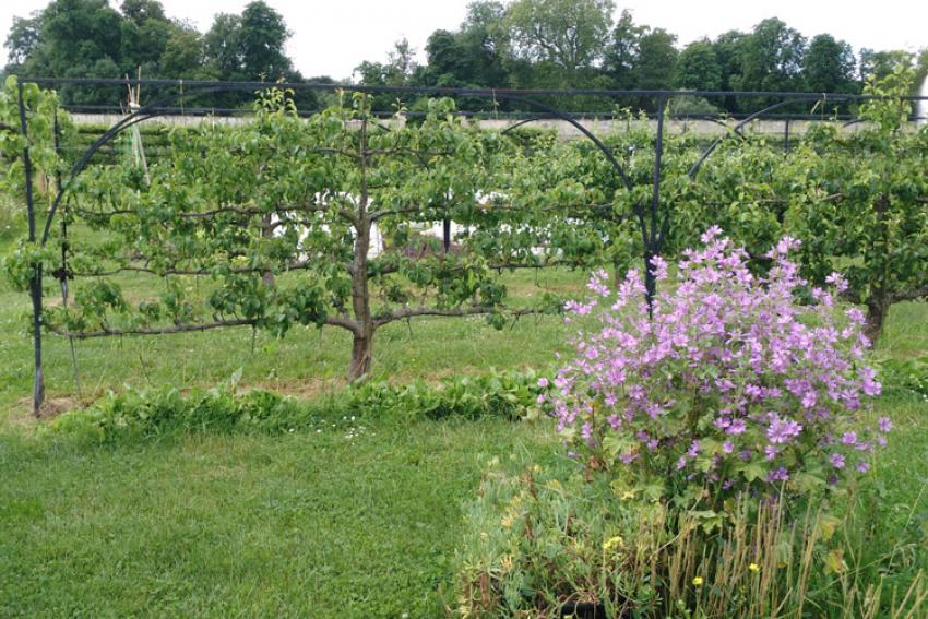 UNEP : La 27e règle professionnelle de l'Union Nationale des Entreprises du Paysage, relative aux travaux d'arboriculture fruitière, a été publiée afin d'encadrer la pratique de ce savoir-faire très spécifique