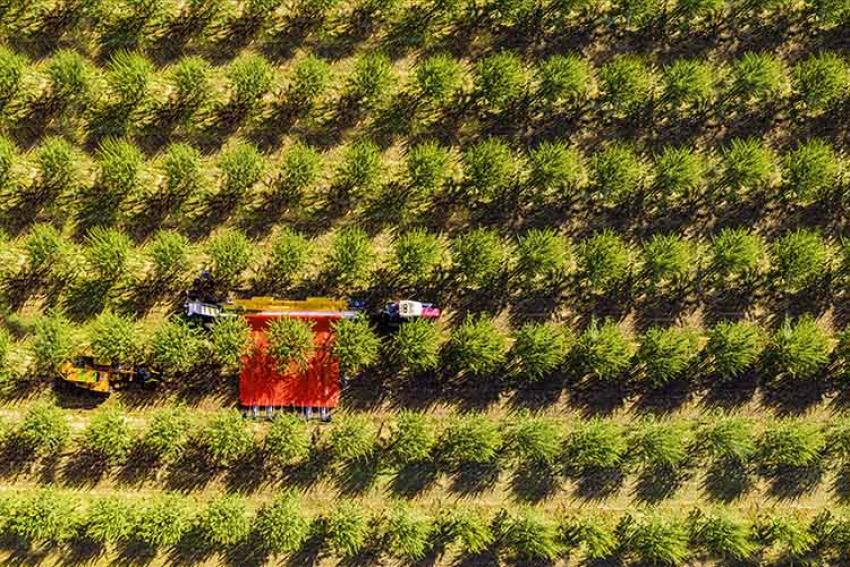 PELLENC : Un industriel français dont les activités et les solutions technologiques durables révèlent un large horizon de compétences (vigne, vergers, espaces verts)